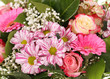 Blumen / Dahlia / Rose / Gerbera