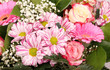 Blumen / Frühling / Sommer