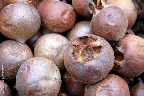 Common medlar