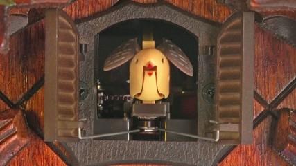cuckoo clock ringing