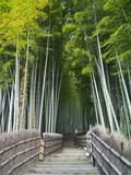 Bambushain
