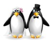 pinguini sposi