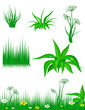 The green grass on white background