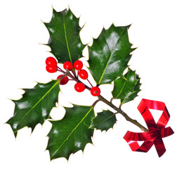 Holly (Ilex) - isolated on white, with red ribbon