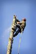 Arborist cutting tree