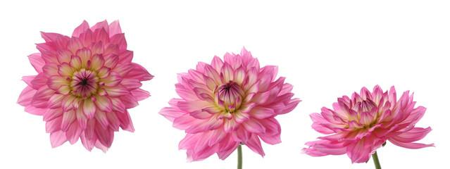 three views of one daisy