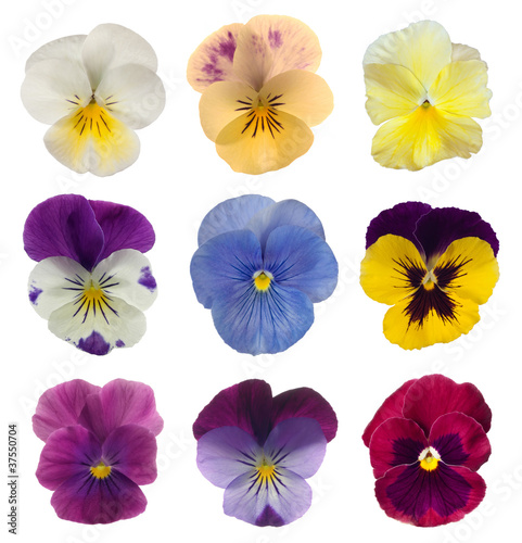 Tuinposter Pansies collection of pansies