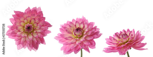 three views of one daisy
