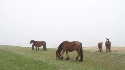 caballos en la niebla5