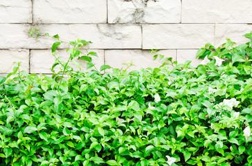 Fresh plant fence