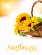 fresh sunflowrs