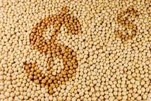Rolnictwo soja surowców z symbolem dolara