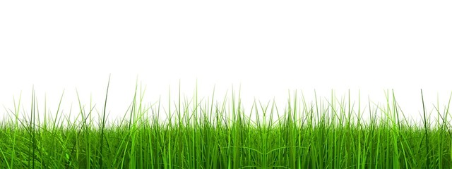 High resolution grass banner isolated