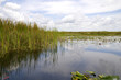 Reflections in the Everglades Florida USA