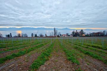 Swiss vineyard during winter time