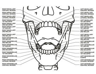 Human dental chart