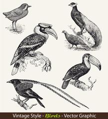 vintage style - Vogel Vögel - Vector Set