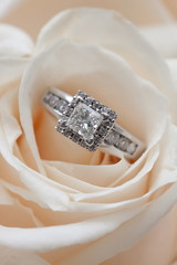 Diamond Ring inside White Rose