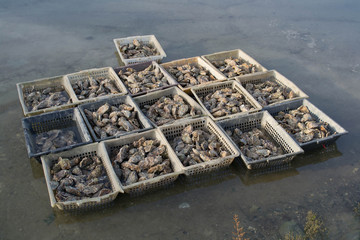 Huîtres - Bassins de Claire