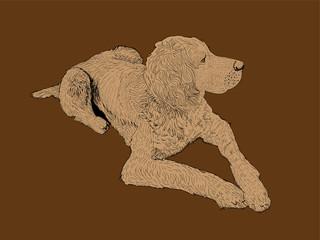 isolated hound dog - illustration