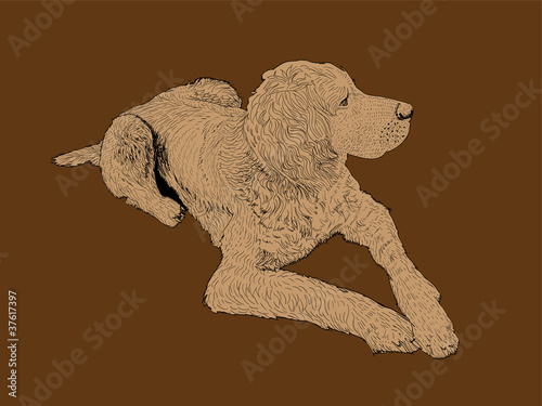 isolated hound dog - illustration