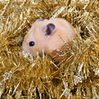 Little hamster in tinsel