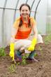 woman planting tomato