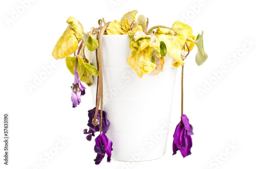 Dead flower isolated