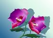 İki mor çiçek
