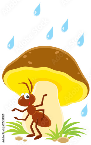 ant sitting under a big mushroom in the rain