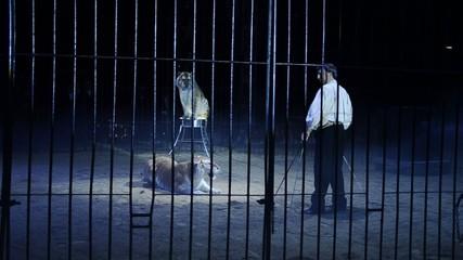 circo, tigri e domatore