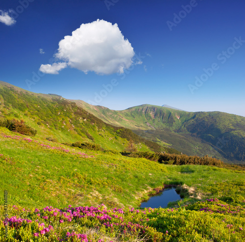 Spring landscape with the cloudy sky and Flower