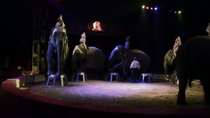 circo, lo show degli elefanti