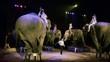 circo, il girotondo degli elefanti