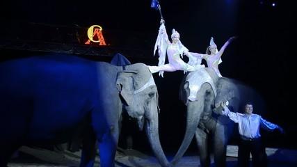 circo, la ragazza e gli elefanti