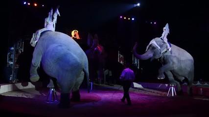 i giganti del circo