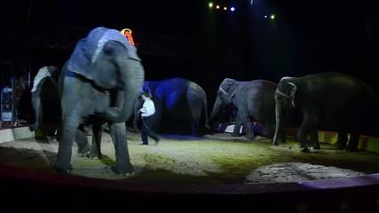 circo, la danza degli elefanti