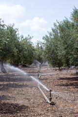 Irrigatori in Uliveto