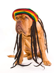 Rastafarian Hat Dog
