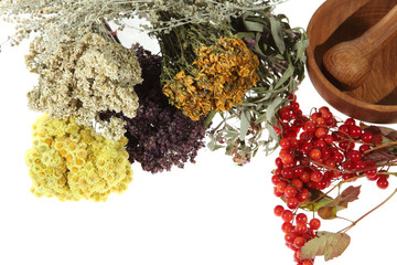 Medicinal herbs on the white background