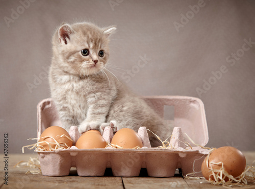 kitten and eggs