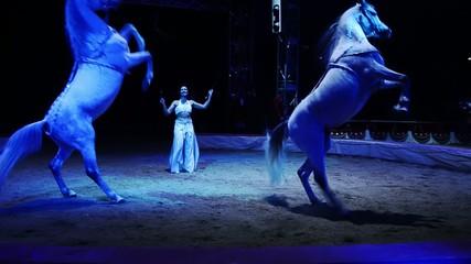 circo, i cavalli ammaestrati