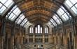 Musée de l'Histoire naturelle, Londres, le dome