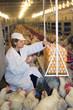 Farmer collecting eggs in chicken farm