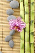 cadre du spa, orchidée rose avec des pierres sur le bambou