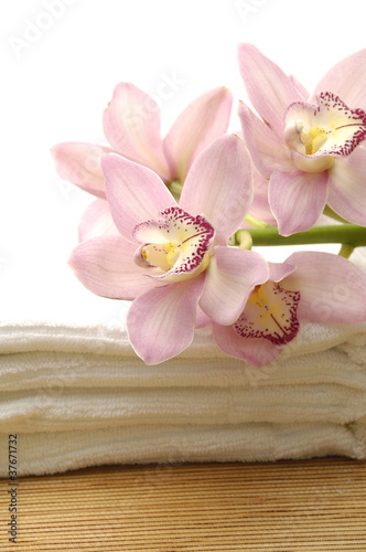 Branch pink orchid on towel