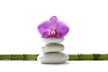 pink orchid on stack stones in balance and bamboo
