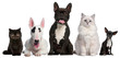 Group of cats and dogs sitting in front of white background