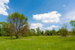 Green meadow in forest