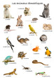 Collage of pets and animals in French
